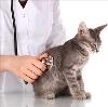 Ветеринарные клиники в Верхней Сысерти
